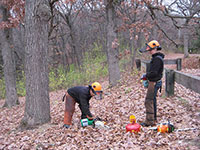 Oct 2013 Buckthorn Removal