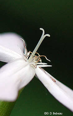 style and stamens
