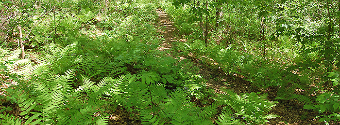 Fern glen entrancer