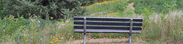 Bench in the Upland