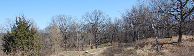 Various bare trees