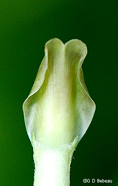 top side of flower