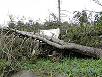 Damage near Garden entrance