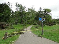 damage on walk path