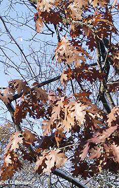 fall brown color leaf