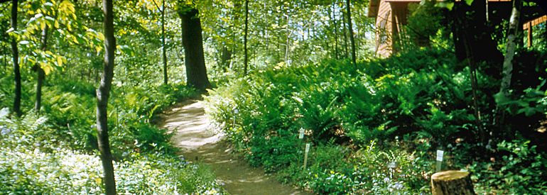 woodland garden east path