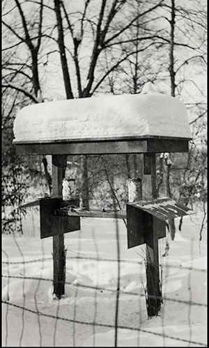 Bird feeding station 1936