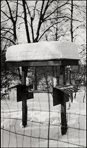 1936 bird feeding station