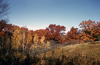 Upland in fall of 1955
