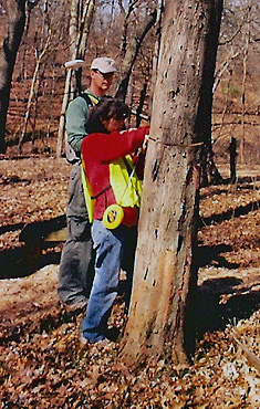 Kunde Employees measuring trees