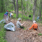 Garlic Mustard Removal